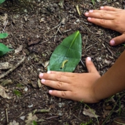 children's hands on forest ground